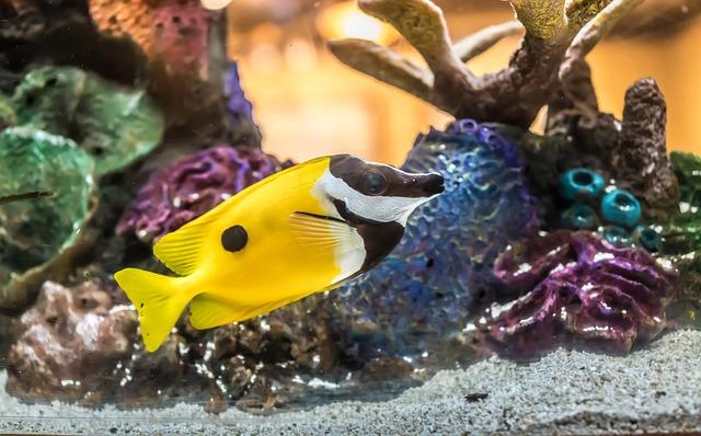 Jak Dobrać Oświetlenie Led Do Akwarium Blog Oświetlenie